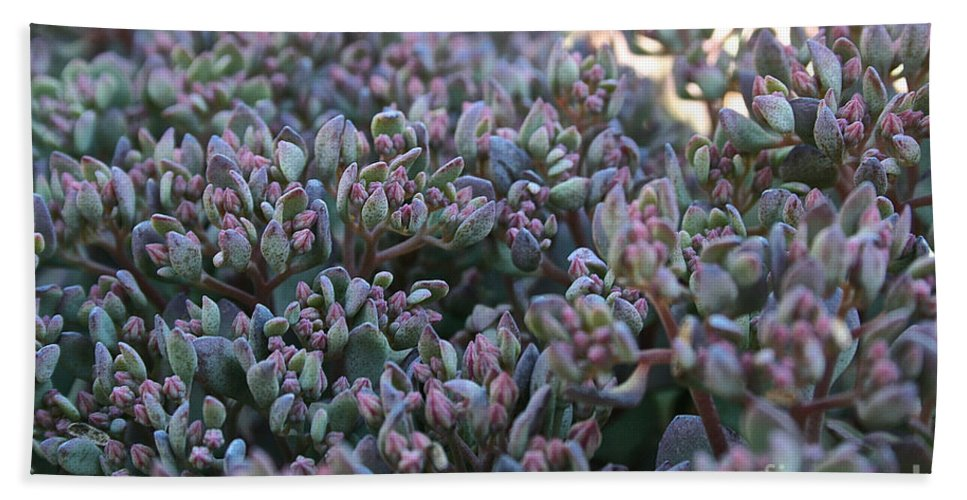Outdoors Bath Sheet featuring the photograph Color Flash by Susan Herber