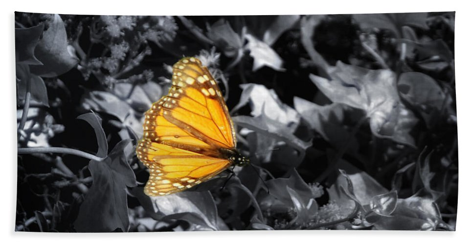 Butterfly Bath Sheet featuring the photograph Color Me Beautiful by Donna Blackhall