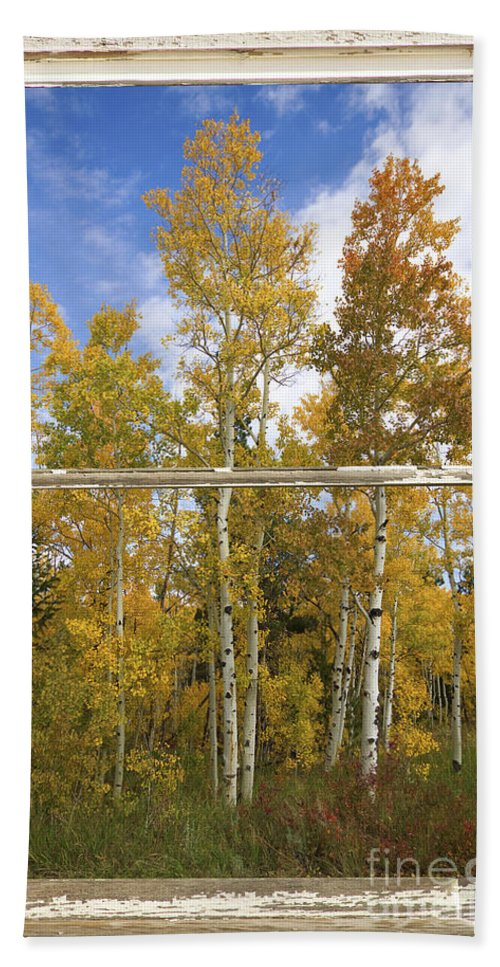 Windows Hand Towel featuring the photograph Colorado Autumn Aspens Picture Window View by James BO Insogna