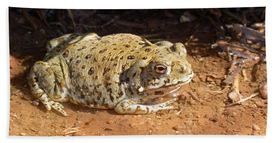 Colorado River Toad Bath Sheet featuring the photograph Colorado River Toad by Randall Ingalls