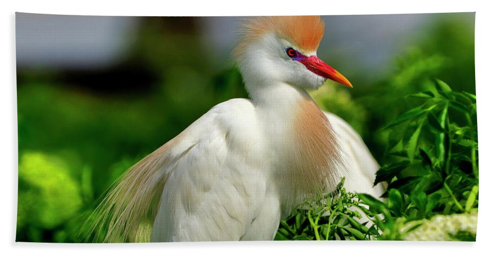 Cattle Bath Sheet featuring the photograph Colorful Cattle Egret by Bill Dodsworth