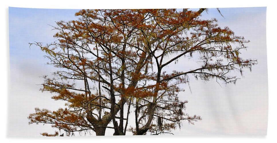Cypress Hand Towel featuring the photograph Colorful Cypress by Al Powell Photography USA