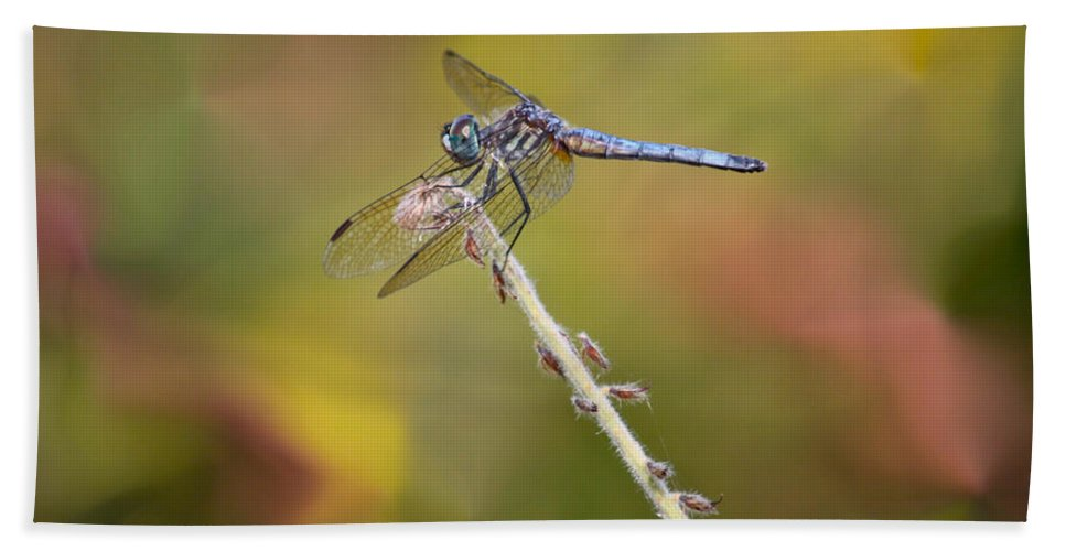 Dragonfly Bath Sheet featuring the photograph Colorful Dragonfly Dream by Carol Groenen