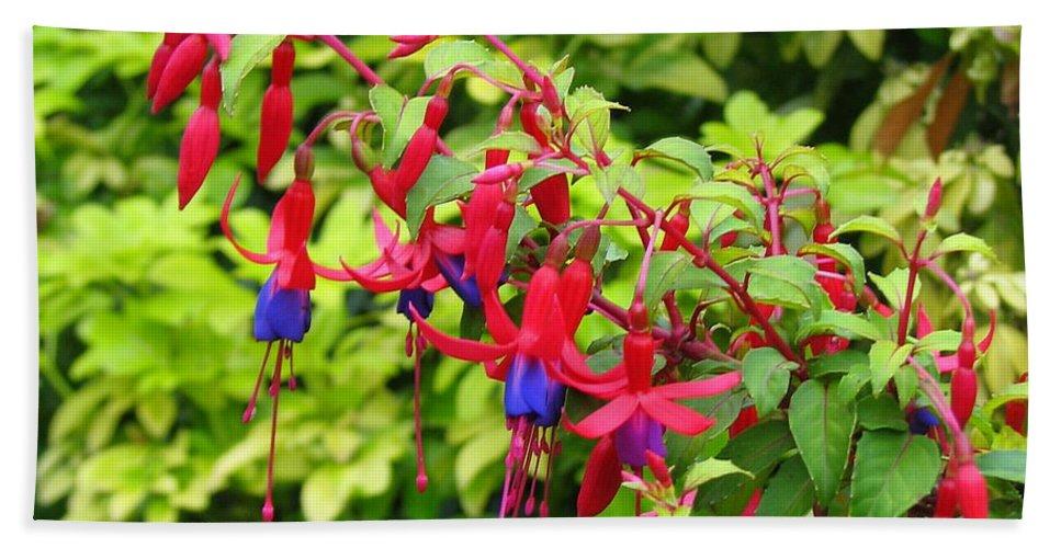 Fuchsia Bath Sheet featuring the photograph Colorful Fuchsia by Carla Parris