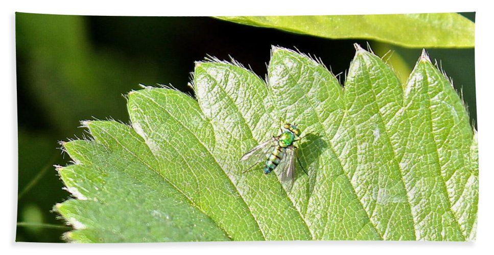 Colorful Hand Towel featuring the photograph Colorful Garden Fly 2 by Kume Bryant