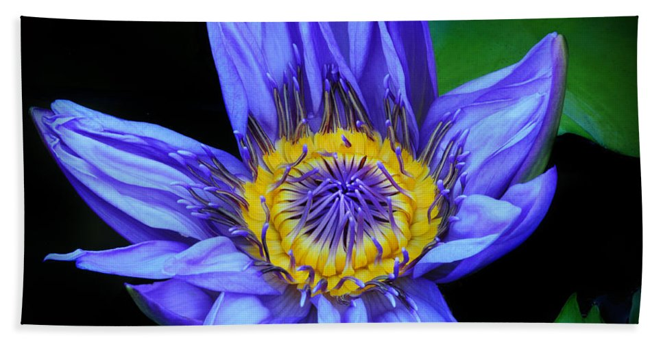 Waterlily Bath Sheet featuring the photograph Colorful Lily by Dave Mills
