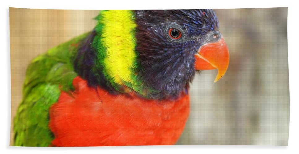 Lorikeet Bath Sheet featuring the photograph Colorful Lorikeet Parrot by Terry Fleckney