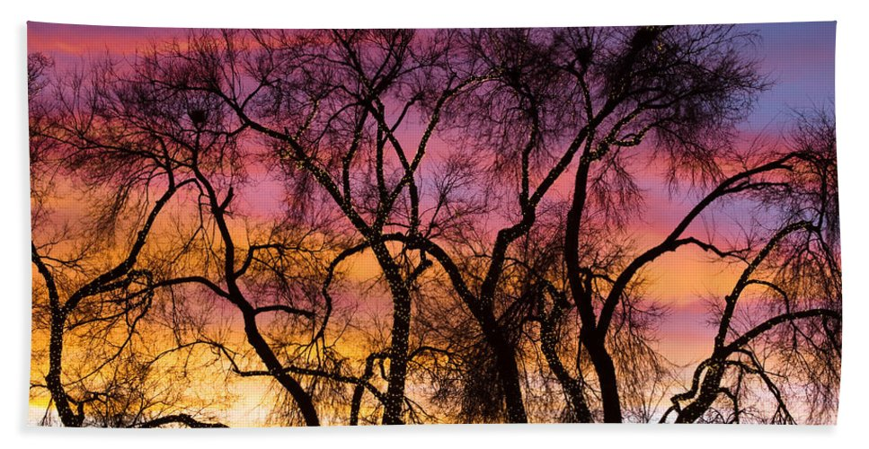 'canvas Art' Hand Towel featuring the photograph Colorful Silhouetted Trees 26 by James BO Insogna