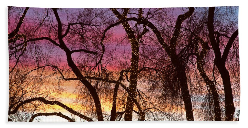 'canvas Art' Hand Towel featuring the photograph Colorful Silhouetted Trees 37 by James BO Insogna