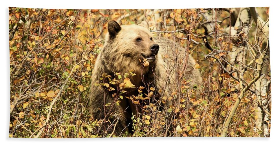 Grizzly Bear Hand Towel featuring the photograph Colorful Smile by Adam Jewell