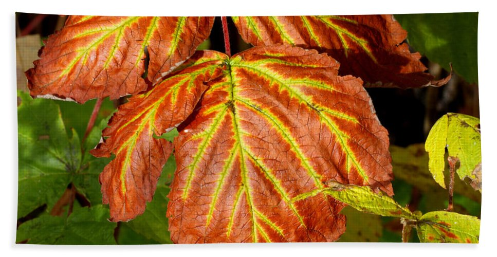 Doug Lloyd Hand Towel featuring the photograph Colors And Veins by Doug Lloyd