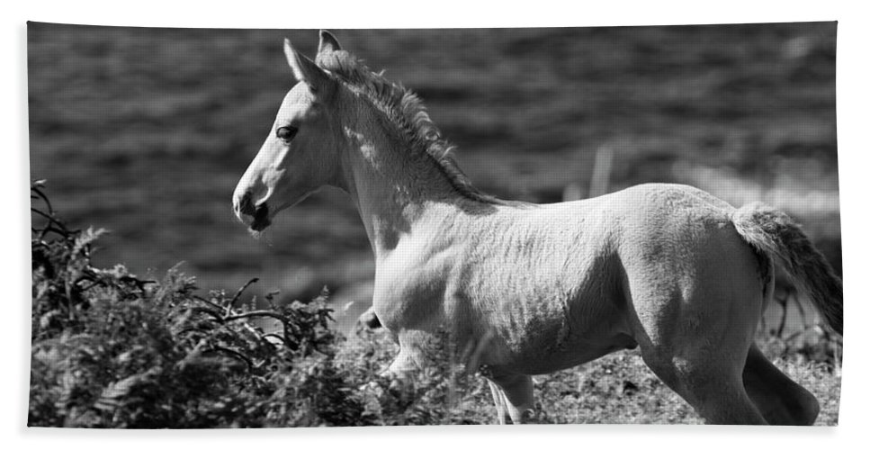 Horse Hand Towel featuring the photograph Colt by Aidan Moran