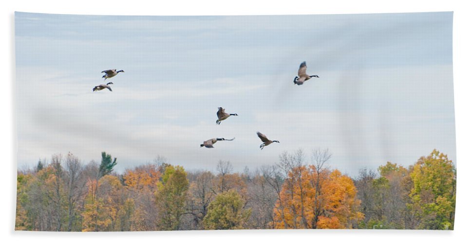Geese Hand Towel featuring the photograph Coming In For Landing by Cheryl Baxter