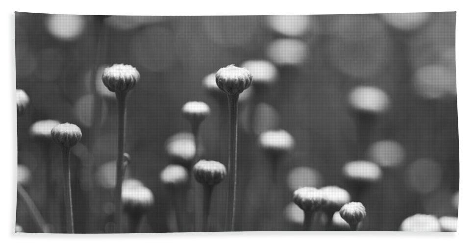 Daisy Bath Sheet featuring the photograph Coming Up Daisies Abstract In Black And White by Kathy Clark