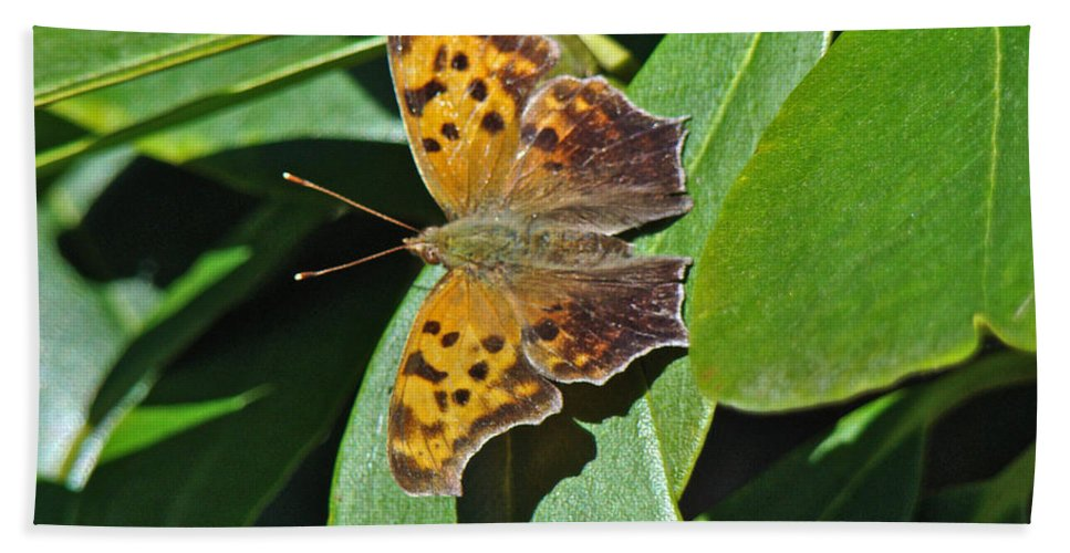 Polygonia C Album Hand Towel featuring the photograph Comma Anglewing Butterfly - Polygonia C-album by Mother Nature