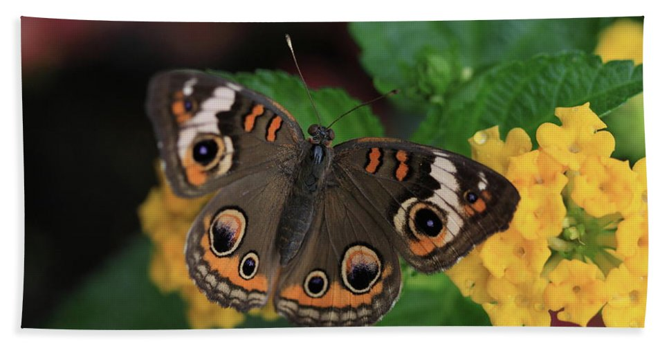 Butterfly Hand Towel featuring the photograph Common Buckeye by Rick Berk