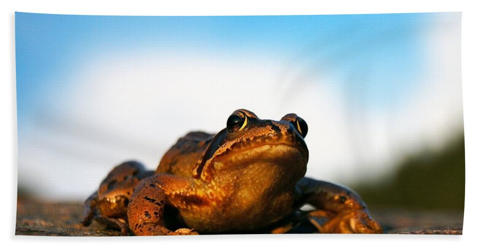 Common Frog Hand Towel featuring the photograph Common Frog by Gavin Macrae