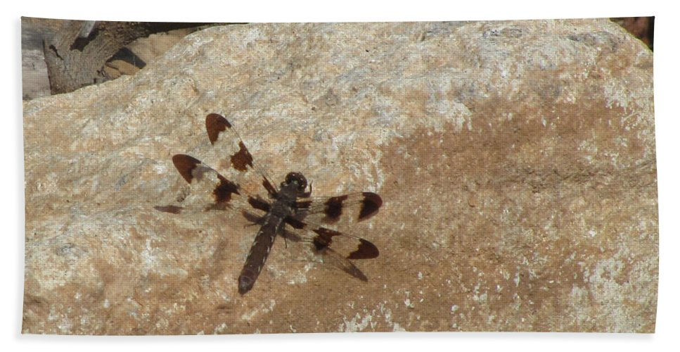 Insect Bath Sheet featuring the photograph Common Whitetail Dragonfly by Donna Brown