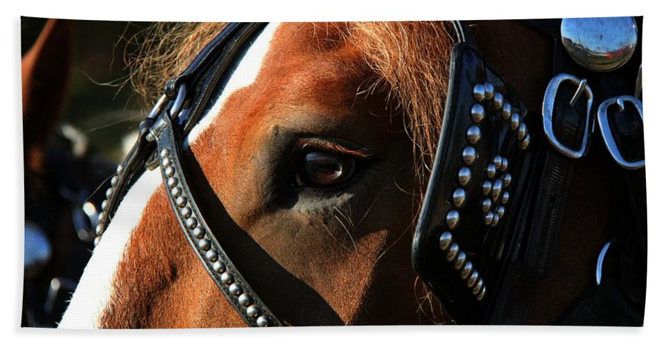 Animal Hand Towel featuring the photograph Concentration by Davandra Cribbie