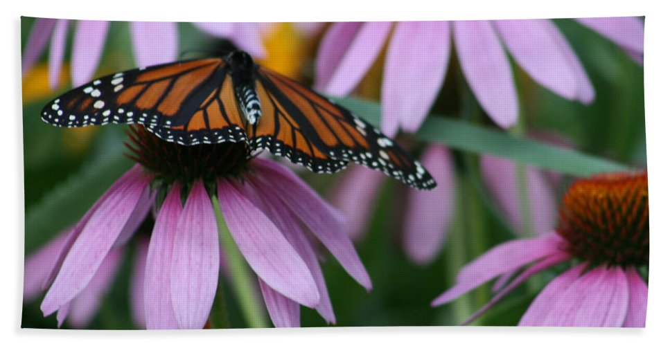 Nature Bath Sheet featuring the photograph Cone Flowers And Monarch Butterfly by Kay Novy