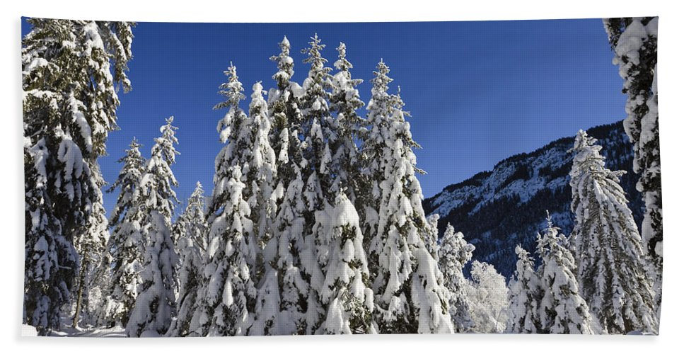 Mp Hand Towel featuring the photograph Coniferous Forest In Winter by Konrad Wothe