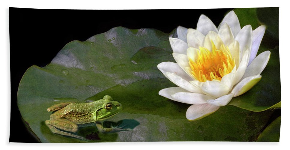 Waterlily Hand Towel featuring the photograph Contemplating A Lily by Dave Mills