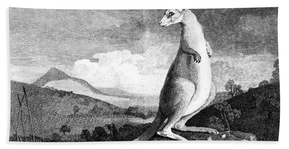 1773 Bath Sheet featuring the photograph Cook: Kangaroo, 1773 by Granger
