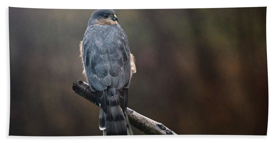Hawk Bath Sheet featuring the photograph Coopers Hawk by Susan Capuano