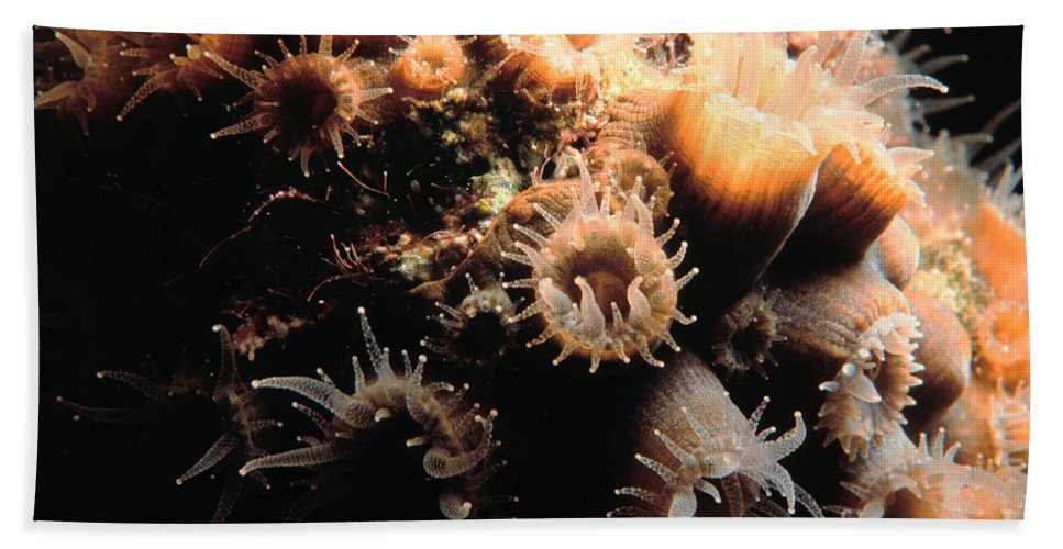 Coral Hand Towel featuring the photograph Coral Feeding 5 by Mike Nellums