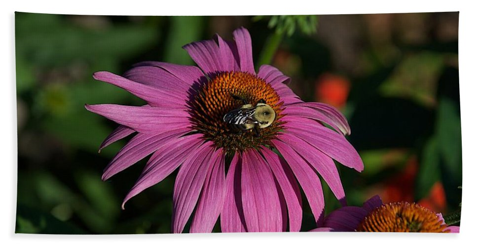Bumble Bee Bath Sheet featuring the photograph Corn Flower by Joseph Yarbrough