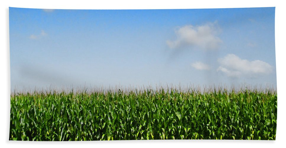 Corn Bath Sheet featuring the photograph Corn Row by Kathy Clark