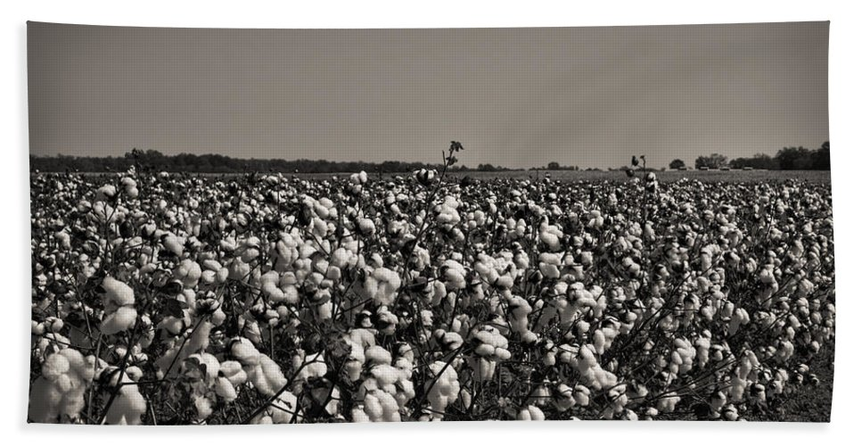 Cotton Bath Sheet featuring the photograph Cotton The Heart Of Dixie by Kathy Clark