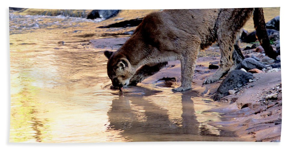 Cougar Bath Sheet featuring the photograph Cougar Stops For A Drink by Larry Allan
