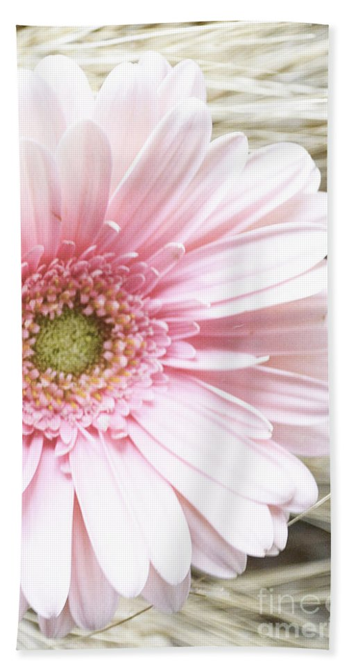 Gerber Daisy Bath Sheet featuring the photograph Country Pink by Traci Cottingham