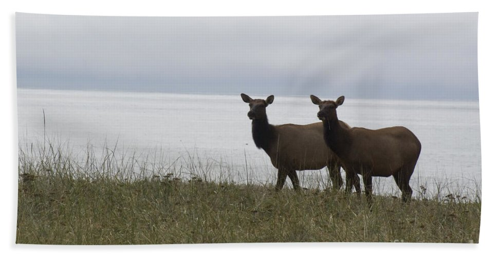 Elk Hand Towel featuring the photograph Cow Elk Pair On Beach by Jim And Emily Bush
