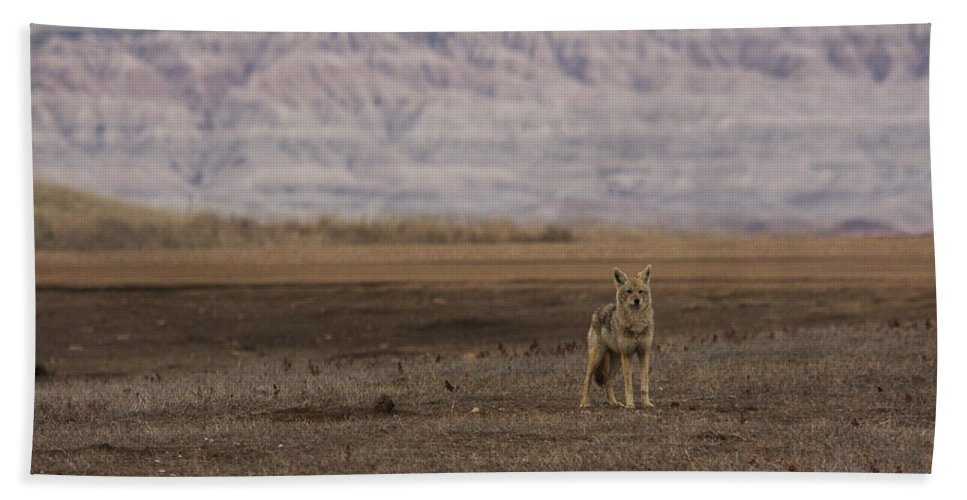 Coyote Hand Towel featuring the photograph Coyote Badlands National Park by Benjamin Dahl