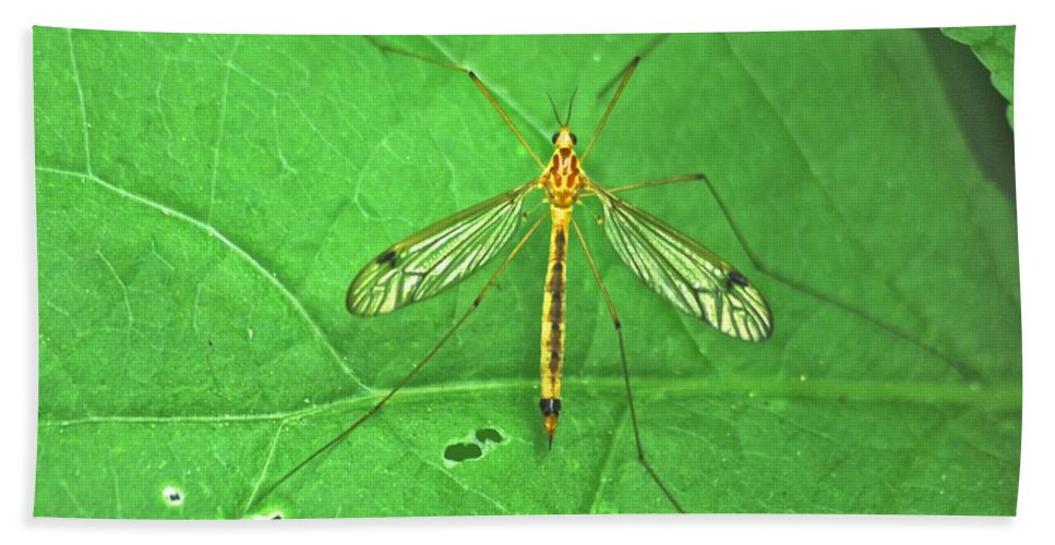 Close-up Bath Sheet featuring the photograph Crane Fly 7623 by Michael Peychich