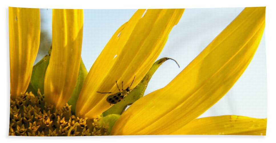 Sunflower Hand Towel featuring the photograph Crawling Along The Sunflower by Darleen Stry