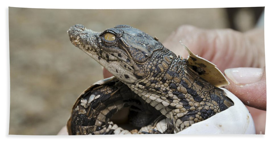 Alligator Bath Sheet featuring the photograph Crocodile And Alligator Breeding Farm by Shay Levy