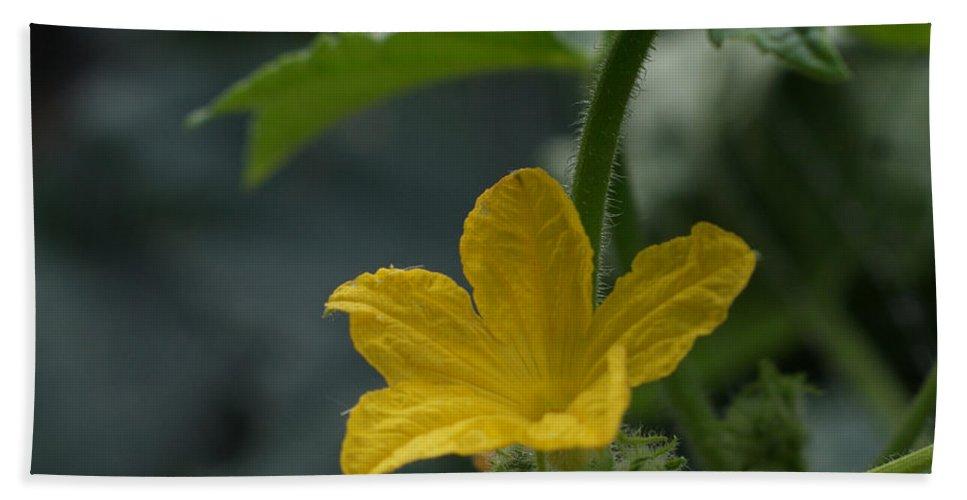 Cucumber Flower Bath Sheet featuring the photograph Cucumber Flower by Ernie Echols