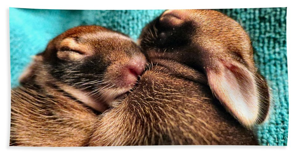 Baby Bath Sheet featuring the photograph Cuddles by Art Dingo