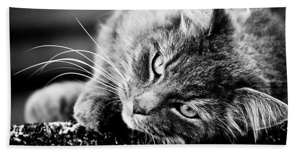 Canon Bath Sheet featuring the photograph Cuddly Cat by Hakon Soreide