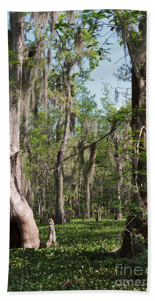Swamp Hand Towel featuring the photograph Cypress Trees And Water Hyacinth In Lake Martin by Louise Heusinkveld