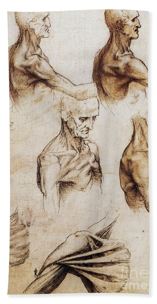 da vinci anatomical drawings hand towel for sale by science source