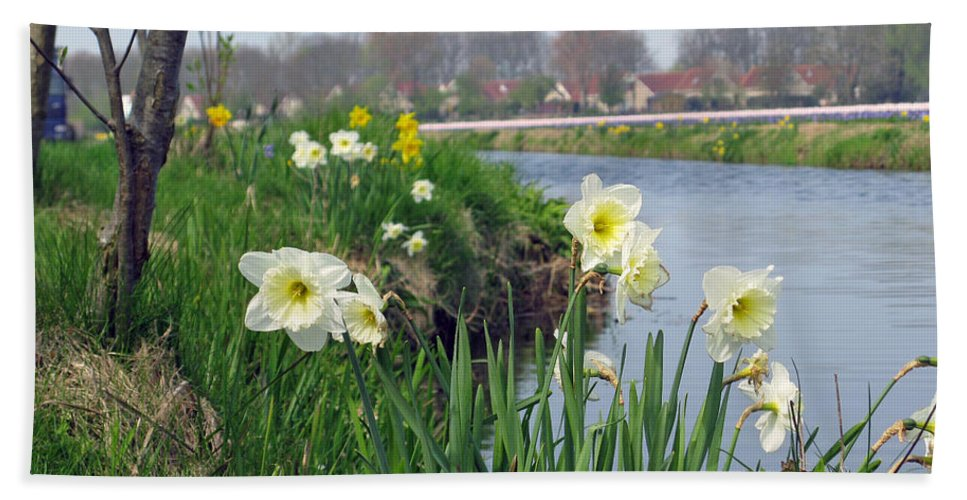 Daffodils Bath Sheet featuring the photograph Daffodils In Holland 01 by Ausra Huntington nee Paulauskaite