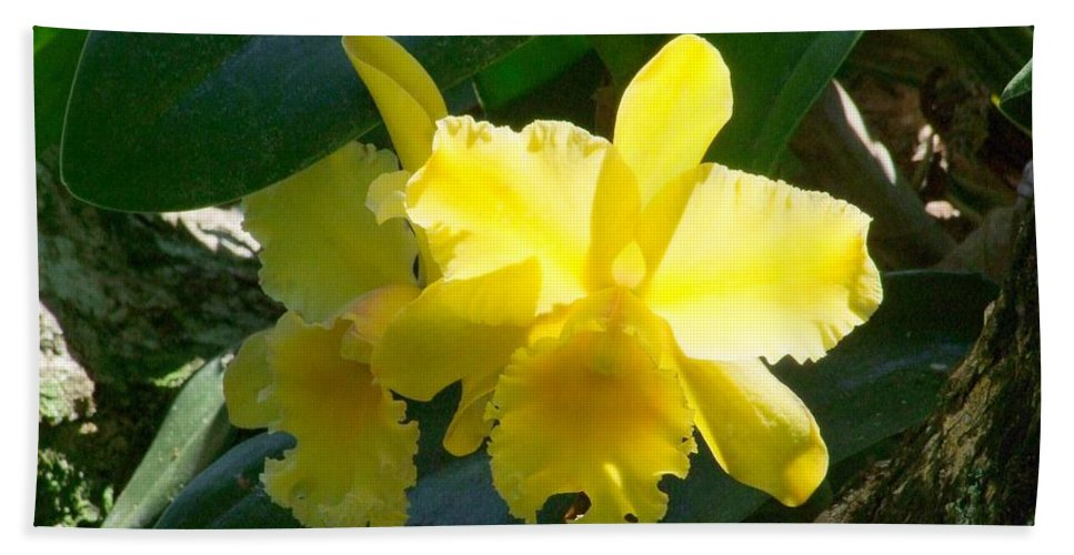 Daffodil Bath Sheet featuring the photograph Daffodils In The Wild by Mary Deal
