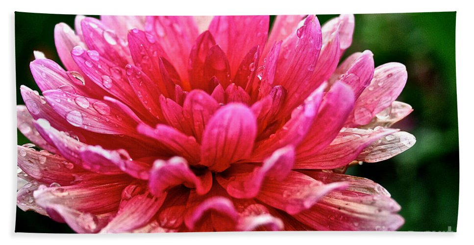 Floral Hand Towel featuring the photograph Dahlia Dew Drops by Susan Herber