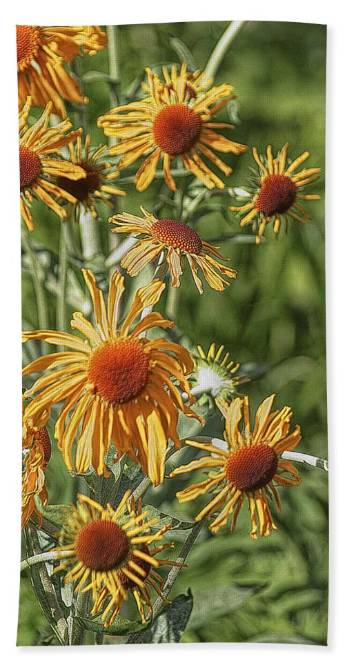 Art Bath Sheet featuring the photograph Daisies by Randall Nyhof