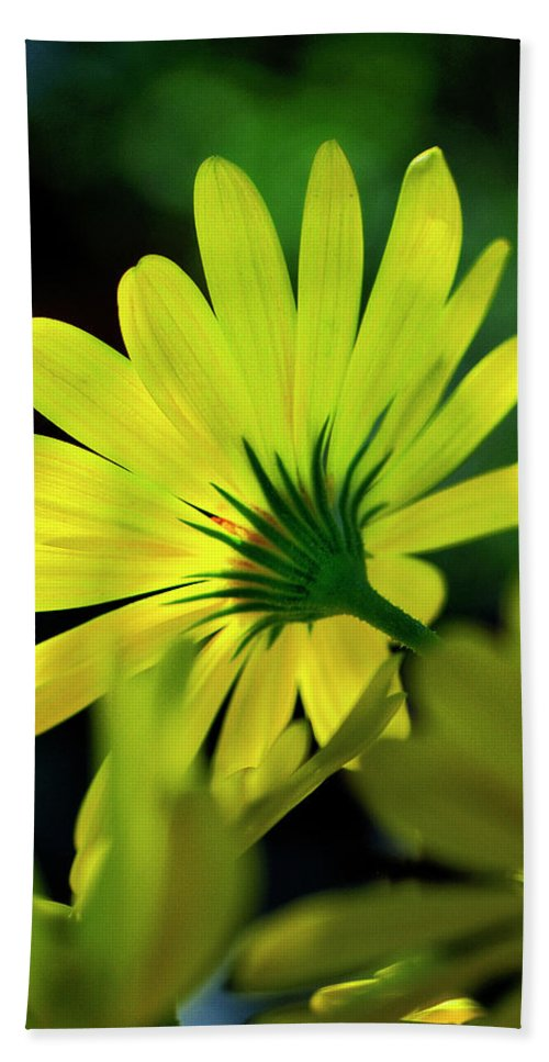 Flower Hand Towel featuring the photograph Daisy A Different Look by Bill Dodsworth