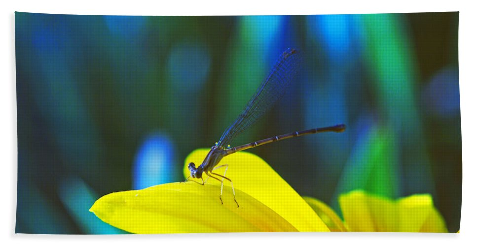 Insect Bath Sheet featuring the photograph Daisy And Dragonfly by Kay Lovingood